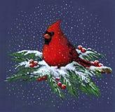 Gráfico del cardenal en nieve Fotografía de archivo