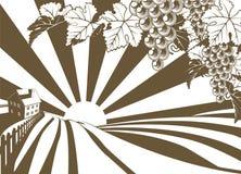 Gráfico del viñedo de la vid de uva de la salida del sol Imagenes de archivo
