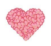 Corazón de Rose Ilustración del Vector