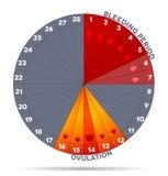 Gráfico femenino del ciclo menstrual Imagen de archivo