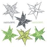Gráfico fijado con los succulents en el fondo blanco Mano libre illustration