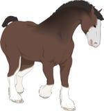 Gráfico hermoso, caballo de la granja Fotografía de archivo libre de regalías