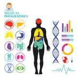 Gráfico médico del Info Imagen de archivo libre de regalías