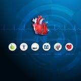 Gráfico saudável da informação do coração ilustração stock
