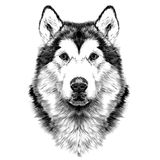Gráficos de vector del bosquejo de la simetría de la cabeza de perro stock de ilustración