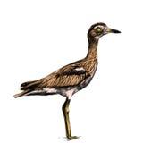 Gráficos de vetor completos do esboço do pássaro ilustração stock
