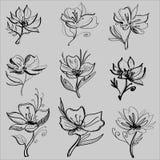 Gráficos de vetor do desenho com teste padrão floral para o projeto Projeto natural da flor floral Gráfico, desenho de esboço Fotos de Stock