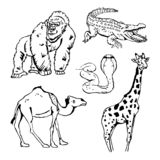 Gráficos a mano del lápiz, animales africanos fijados fotos de archivo