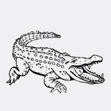 Gráficos a mano del lápiz, cocodrilo, cocodrilo, croc Grabado, estilo de la plantilla Logotipo blanco y negro, muestra, emblema fotos de archivo