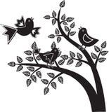 Gráficos preto e branco dos pássaros Foto de Stock