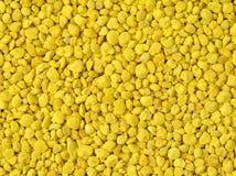 Gránulos de oro del polen de la abeja Fotografía de archivo