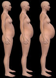 Grávido, gravidez, bebê, encena Illustraton Fotografia de Stock Royalty Free