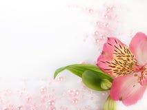 Grânulos e flor Fotos de Stock Royalty Free