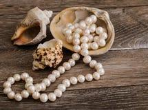 Grânulos e shell Fotos de Stock Royalty Free