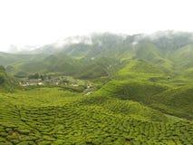 Größter Tee-Garten - Cameron-Hochland lizenzfreie stockbilder
