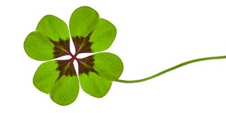 Grüner Klee mit vier Blättern stockfotos