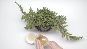 Grüner Tee mit Cup und Teekanne stock video