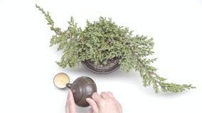 Grüner Tee mit Cup und Teekanne stock footage