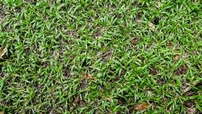 Grünes Gras der Draufsicht, natürlicher Hintergrund, Großaufnahme lizenzfreies stockfoto