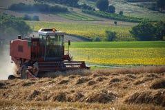 Grão 3 da colheita Imagem de Stock
