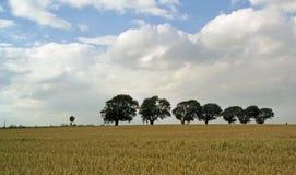 Grão-campo com as árvores na linha Imagens de Stock Royalty Free