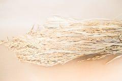 Grão da almofada ou do arroz (oryza) no fundo marrom Fotos de Stock