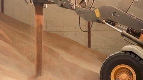 Grão da carga da cubeta do carregador de máquina escavadora, fim acima Montão grande da grão em um armazém na fábrica do alimento vídeos de arquivo