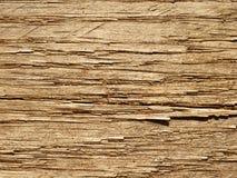 Grão da madeira de carvalho Imagens de Stock Royalty Free