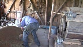 A grão da tração do fazendeiro com cubeta e derrama na máquina da peneiração vídeos de arquivo