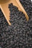 Grão-de-bico preto do Murgia (Itália) Imagem de Stock Royalty Free