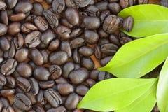 Grão de café bonito do close-up para a textura do fundo Foto de Stock