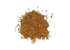 Grão de Cereale do Secale de Rye fotografia de stock royalty free