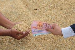 Grão de compra do arroz do homem de negócios fotografia de stock royalty free