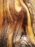 Grão de madeira ondulada Imagem de Stock