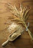 Grão do arroz fotos de stock royalty free