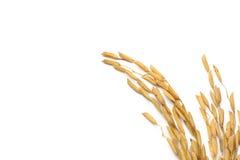 Grão do arroz Imagens de Stock Royalty Free