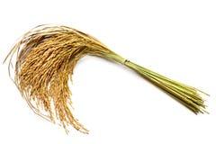 Grão do arroz Fotografia de Stock Royalty Free