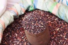 Grão do arroz Imagem de Stock Royalty Free