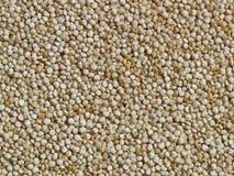 Grão do Quinoa Fotografia de Stock Royalty Free