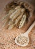 Grão do trigo e das orelhas fotografia de stock royalty free