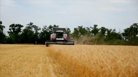 Grão do trigo em um funcionamento da ceifeira e do tTactor de liga da maquinaria agrícola do fundo no campo, movimento lento video estoque