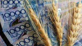 Grão e dinheiro Três cabeças do trigo e quarenta mil KZT O conceito de uma colheita cara, corrupção no campo do agricu fotos de stock