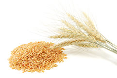 Grão e orelha do trigo Imagem de Stock Royalty Free