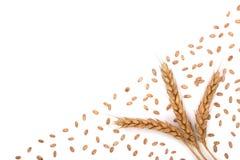 Grão e orelhas do trigo isoladas no fundo branco com espaço da cópia para seu texto Vista superior Imagens de Stock