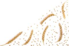 Grão e orelhas do trigo isoladas no fundo branco com espaço da cópia para seu texto Vista superior Fotografia de Stock Royalty Free