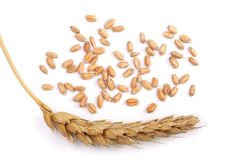Grão e orelhas do trigo isoladas no fundo branco Vista superior Foto de Stock