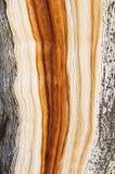 Grão resistida da madeira de pinho fotos de stock