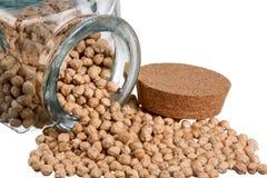 grãos-de-bico Imagem de Stock