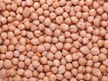 grãos-de-bico Imagens de Stock Royalty Free