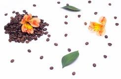 Grãos de café e flor alaranjada em um fundo branco, feijões do hibiscus de café imagem de stock royalty free